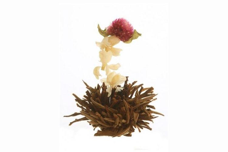 Profikoření - Kvetoucí čaj - Jasmínový polibek