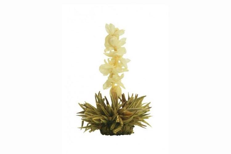 Profikoření - Kvetoucí čaj - Jasmínový květ
